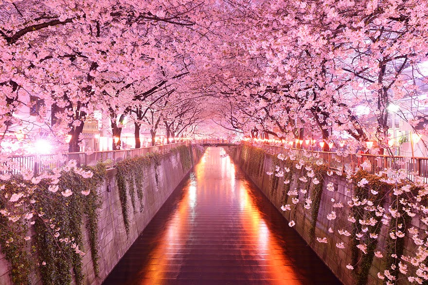 13.-Sakura-Tunnel-Japan-20-Magical-Tree-Tunnels-You-Should-Definitely-Take-A-Walk-Through