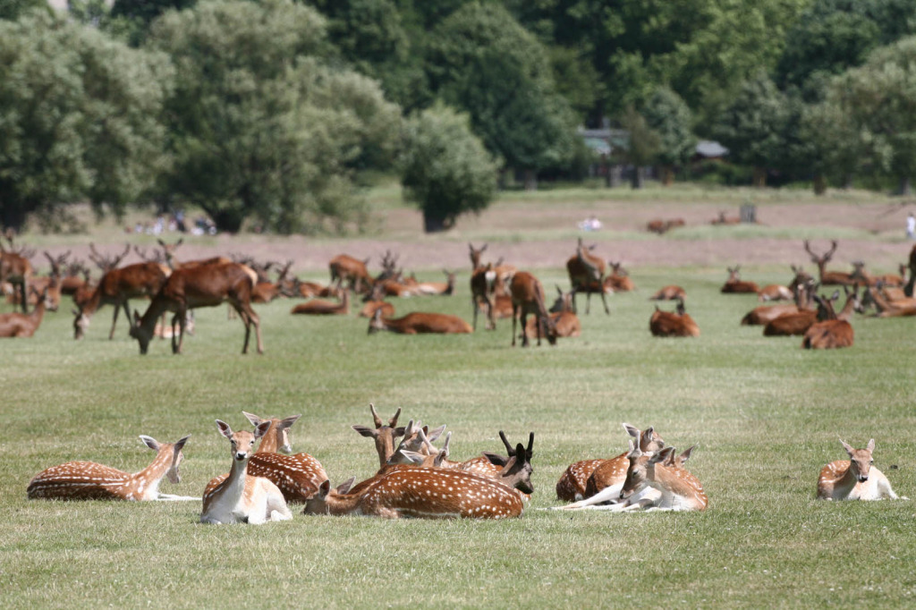 richmondpark